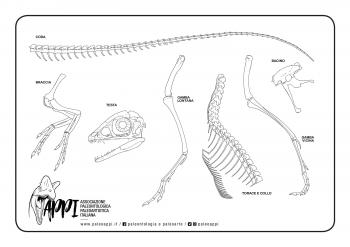 Scipionyx_scheletro
