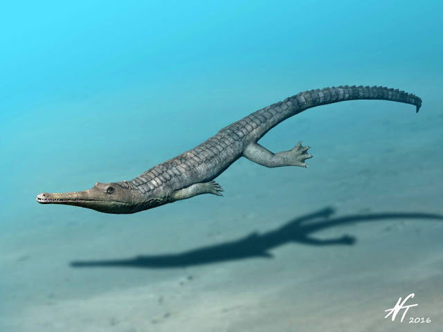 News of the (crocodylomorphs) world
