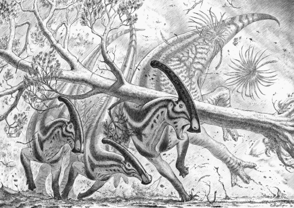 Paleoart reconstruction of a plausible scenario explaining the fossilized injuries in the thorax of ROM 768. In a violent rain and windstorm, a large tree (Platanaceae) falls on an adult Parasaurolophus walkeri, while the group is escaping. The tree falls vertically on the back of the animal, hitting the rib cage and the neural spines of the anterior dorsal vertebrae. Artwork Marzio Mereggia.
